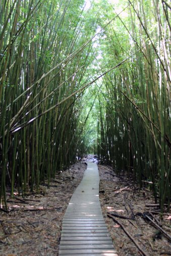 Pipiwai Trail - Bamboo forest