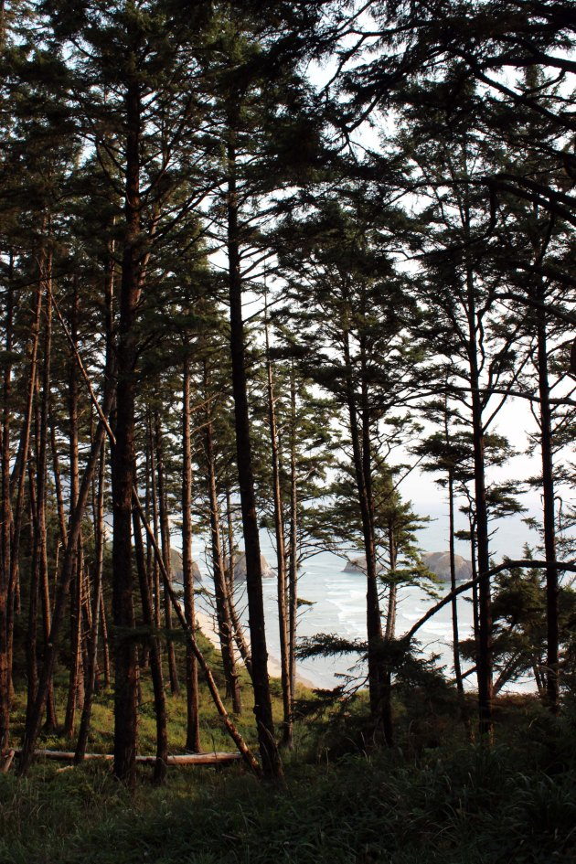 trees in cannon beach oregon