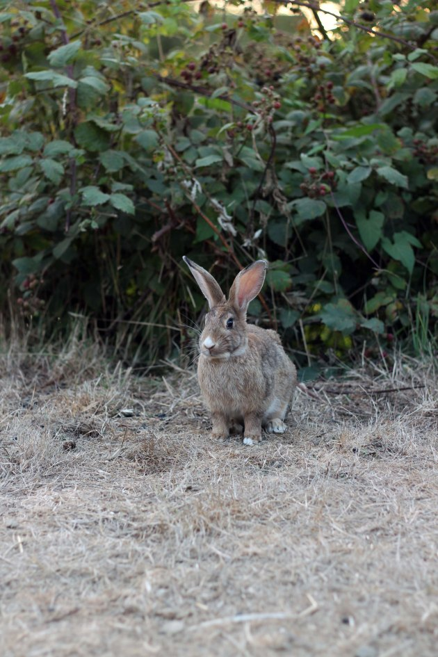 bunny at cannon beach oregon