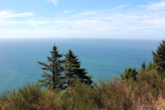 trees and pacific ocean from oregon