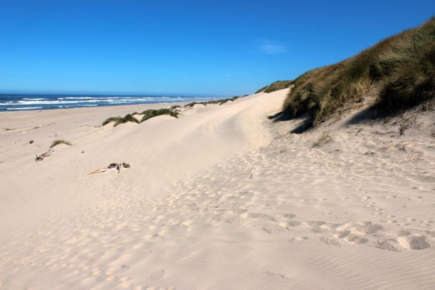 sand dunes in florence oregon