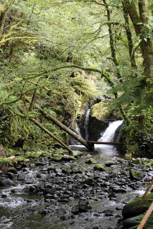 ucluelet british columbia thornton creek hatchery