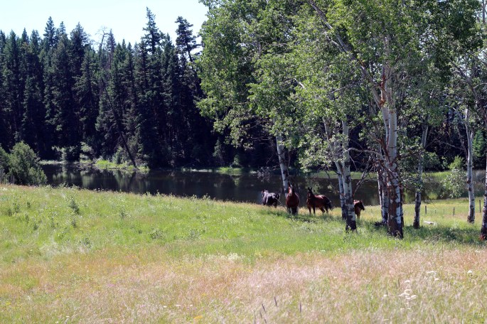 meadow with horses trees and lake